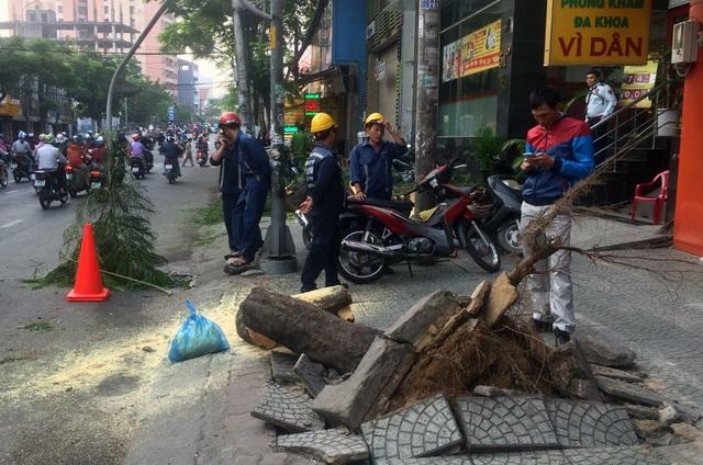 Các nhân viên cây xanh đang dọn dẹp, khắc phục sự cố