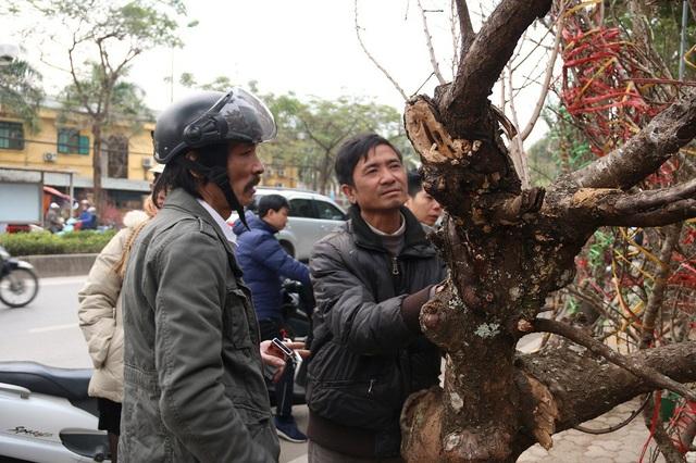 Một gốc đào cổ thụ có giá vào khoảng 10 triệu đồng được bày bán trên đường Lạc Long Quân (Hà Nội)