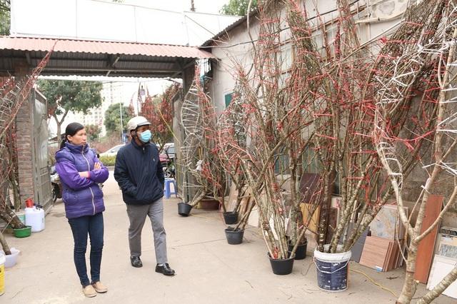 Chị Nguyễn Thị Đủ (Bắc Giang) đang giới thiệu đào rừng cho khách. Năm nay, gia đình chị Đủ có khoảng 200 gốc đào rừng bán Tết Nguyên đán, thời điểm này đã bán được 1/3. Theo thương lái này, năm nay nhu cầu người mua cao nên sức tiêu thụ cũng tốt hơn mọi năm.