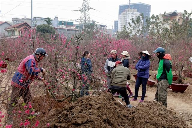 Ở vườn việc đào và di chuyển cây rất vất vả và khó khăn
