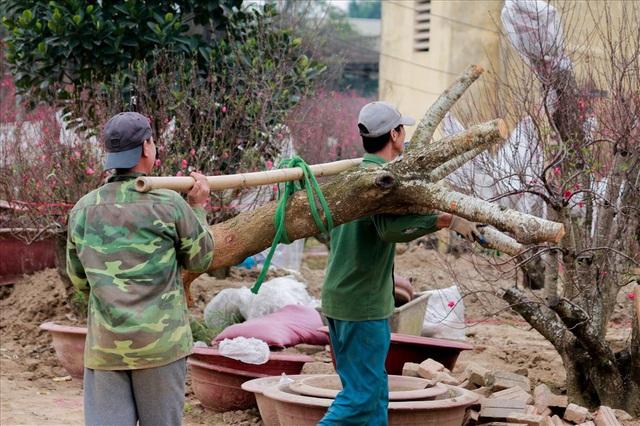 Việc đào và di chuyển cây bắt đầu từ 6h sáng đến 22h đêm mỗi ngày bất kể làm dưới trời lạnh buốt.