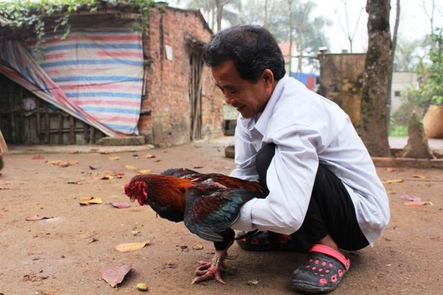 Dù nằm trong Sách đỏ, nhưng gà Móng là loài vật duy nhất không bị cấm nuôi, buôn bán, vận chuyển theo quy định về bảo tồn theo cách mới