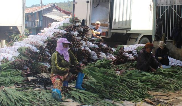 Giá hoa cao và ổn định từ đầu vụ cho đến hôm nay nên cả thương lái và nhà vườn đều lãi cao