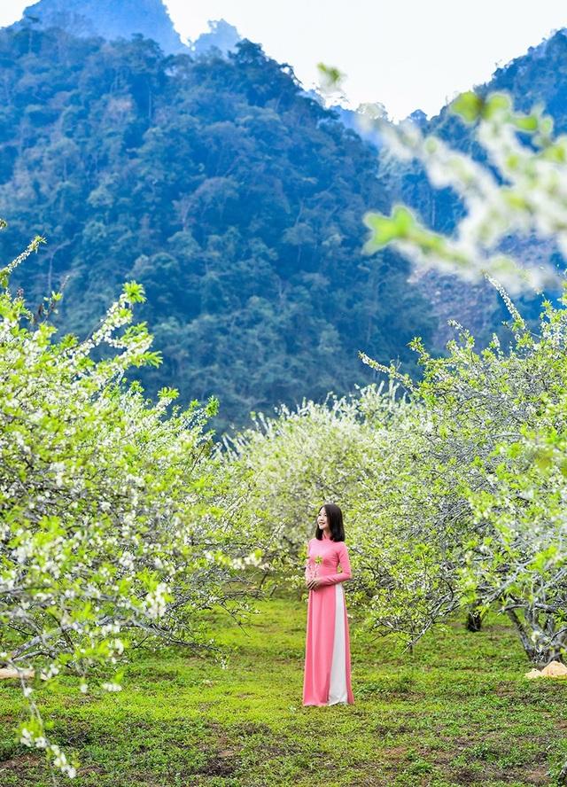 Xuân về đẹp tuyệt giữa rừng hoa mận trắng Mộc Châu - 8