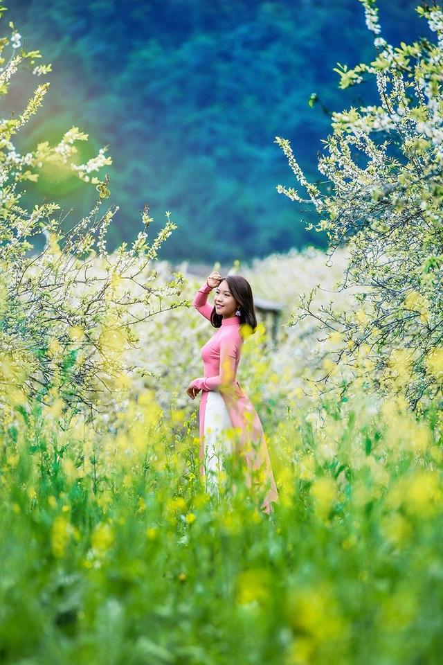 Cảnh đẹp của khu rừng bạt ngàn hoa mận trắng