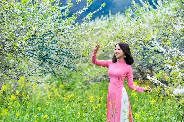 Vào mùa xuân, cây mận Mộc Châu đồng loạt nở hoa trắng. Hoa mận hơi giống hoa mai, hoa đào nhưng có đặc trưng là màu trắng tinh khiết.