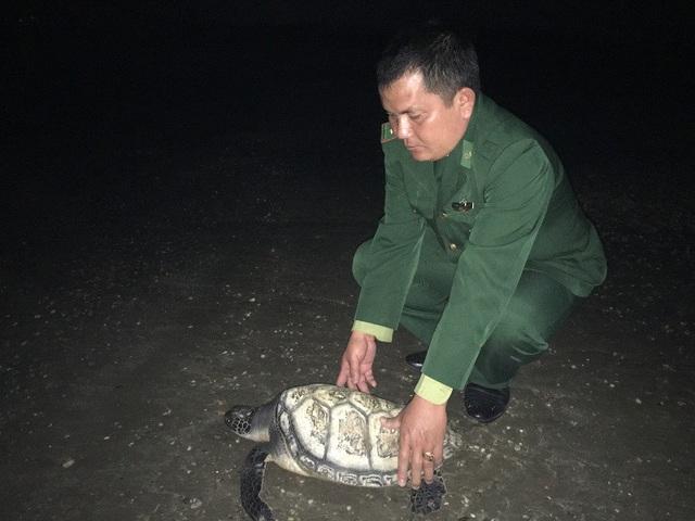 Thượng úy Lưu Trọng Bình kiểm tra sức khỏe của chú vích trước khi thả về biển