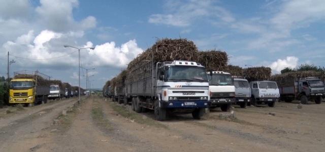 Tỉnh Phú Yên yêu cầu các doanh nghiệp mía đường cần có cơ chế thu mua đặc thù đối với diện tích mía bị ảnh hưởng sau bão số 12