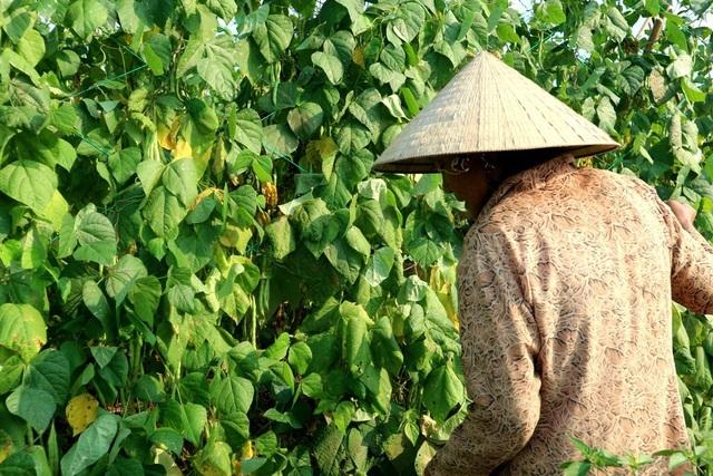 Trước Tết nông sản giá khá cao nhưng người dân chưa thu hoạch được bao nhiêu thì chỉ vài ngày sau Tết, nông sản đột nhiên rớt giá thảm