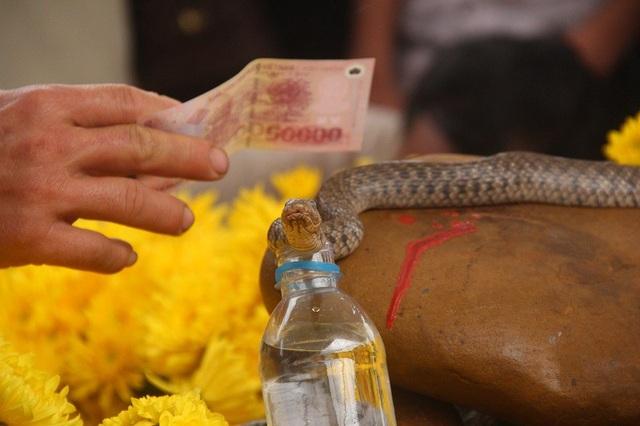 Lượng tiền cúng cho rắn đã lên tới hàng trăm triệu đồng.