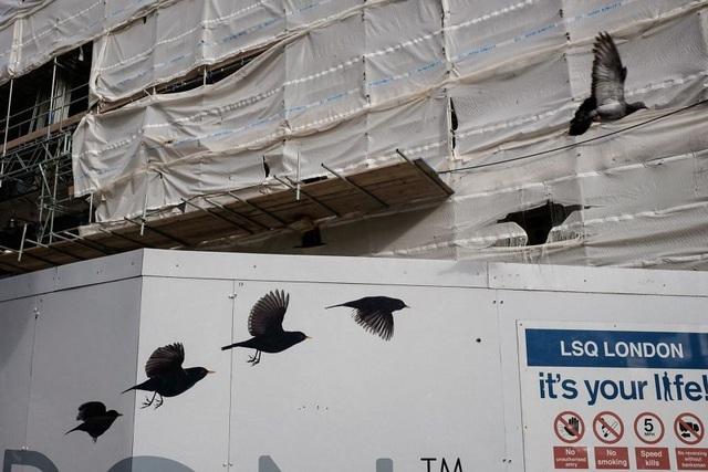 Hình vẽ trên tường, vết rách, và chú chim bằng xương bằng thịt tạo nên một chuỗi hiệu ứng độc đáo.