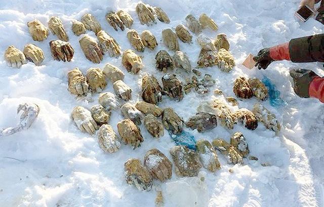 Số bàn tay được tìm thấy cách biên giới Trung Quốc khoảng 30 km. Ảnh: Siberian Times