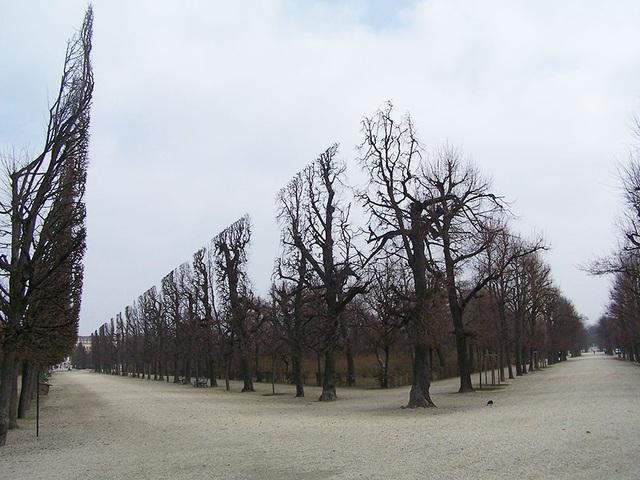 Những hàng cây ở một công viên tại Vienna (Áo) chẳng khác gì một công trình kiến trúc