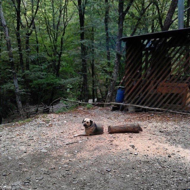 Chú chó được cắt ra từ khúc gỗ?