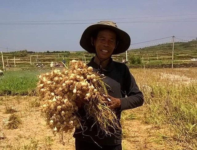 Người nông dân Lý Sơn vui mừng vì sản lượng vàng trắng vụ Đông - Xuân tăng cao