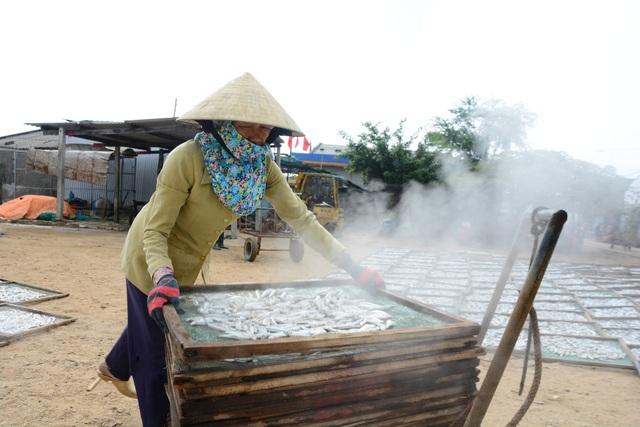 Sau khi hấp chín, cá cơm được đưa đi phơi khô