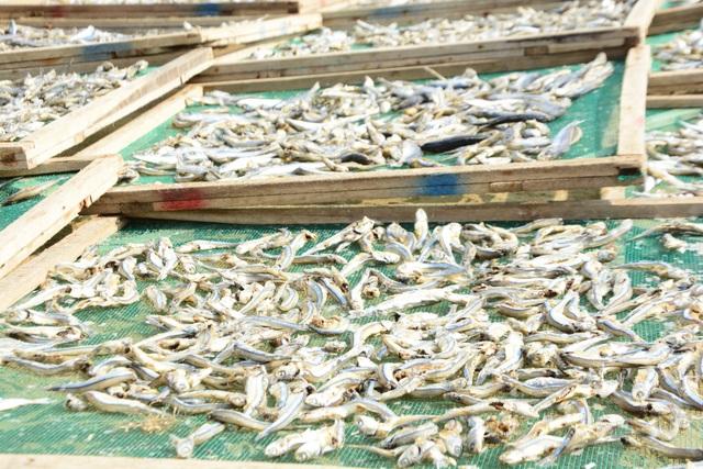 Cá cơm khô Tịnh Kỳ được đưa đi tiêu thụ tại nhiều tỉnh thành và xuất khẩu sang thị trường Lào, Trung Quốc