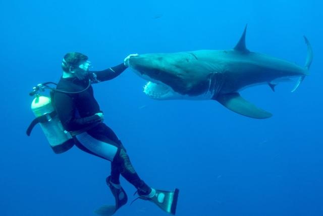 Đảo Guadalupe là một rong những thiên đường ngắm cá mập trắng