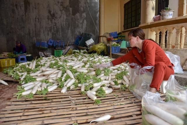 Củ cải trắng thu hoạch về rửa rồi để khô, đóng túi 10kg có thể bán được nhưng không phải lúc nào cũng có người thu mua.
