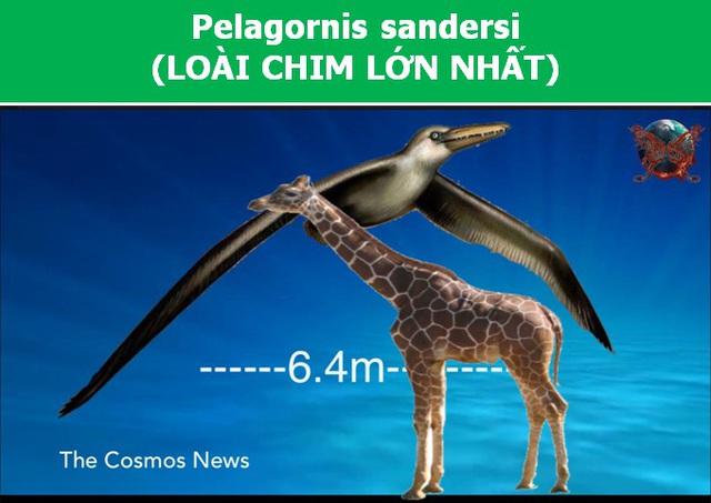 Ngỡ ngàng với kích thước của những tạo vật lớn nhất từng cất cánh lên bầu trời - 4