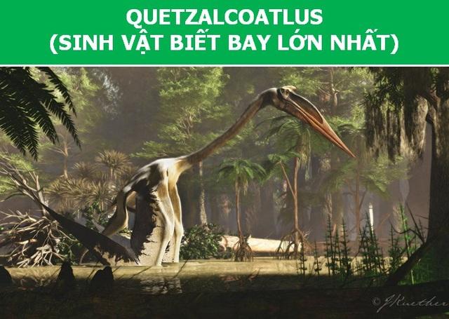 Ngỡ ngàng với kích thước của những tạo vật lớn nhất từng cất cánh lên bầu trời - 5