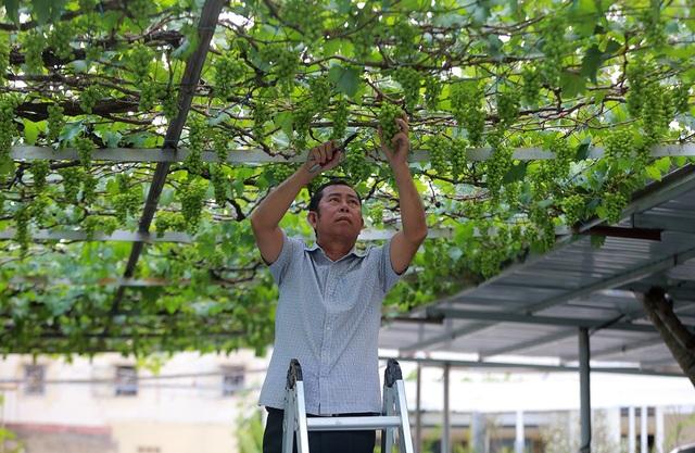 Vốn là cán bộ về hưu nên ông Ở không có nhiều kinh nghiệm trong nông nghiệp, ông phải nghiên cứu qua sách vở, mạng internet.