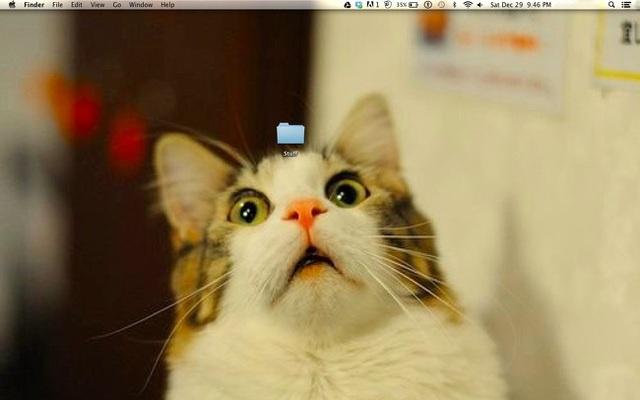 Chẳng biết có nội dung gì bên trong thư mục này mà khiến chú mèo hoảng sợ đến như vậy?