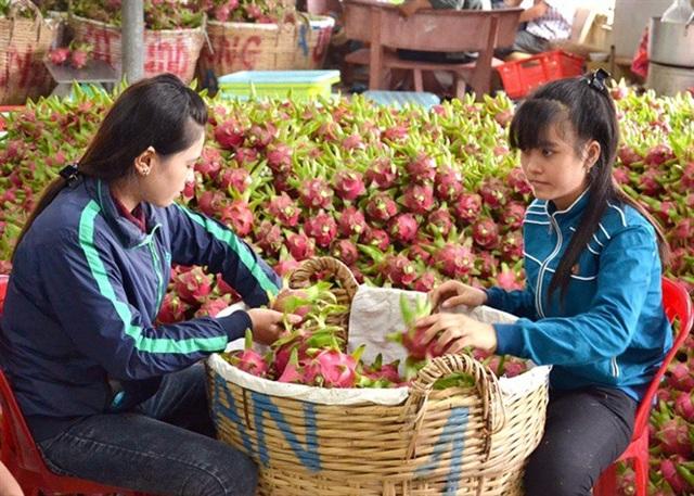 Các mặt hàng rau quả của Việt Nam phụ thuộc quá nhiều vào thị trường Trung Quốc