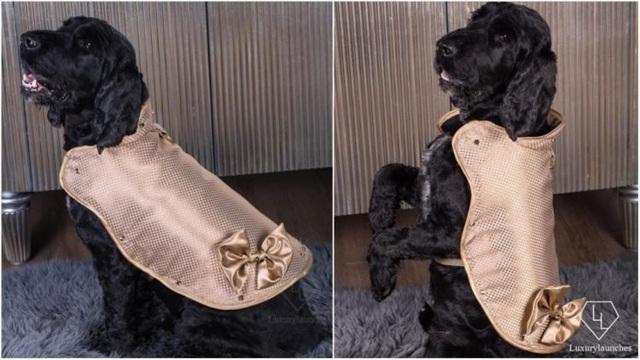 Áo khoác cho chó làm từ vàng 24 karat - 1