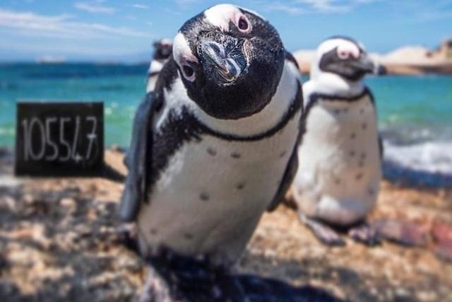 Cảnh đẹp thế giới mê ly qua ống kính của cặp đôi nam nữ Nam Phi - 13