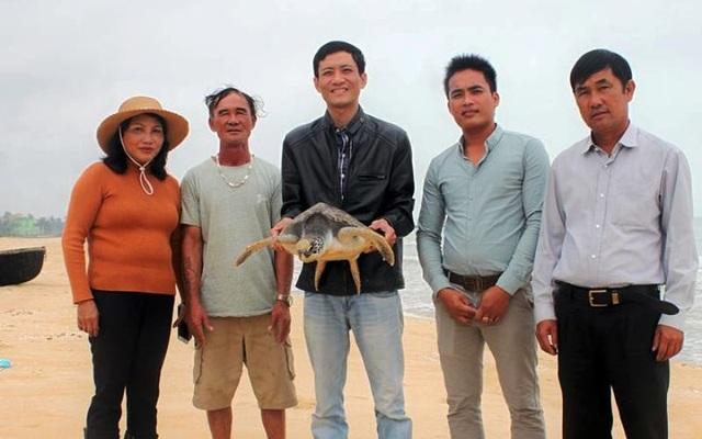 Cá thể rùa biển do ngư dân bắt đã được thả lại môi trường nước