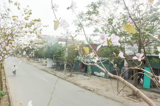 Ở bên kia đường là những hộ dân cư sinh sống. Trong quan niệm của người Thái, hoa ban vừa là biểu tượng của đạo hiếu đối với cha mẹ, vừa là biểu tượng của tình yêu trai gái.