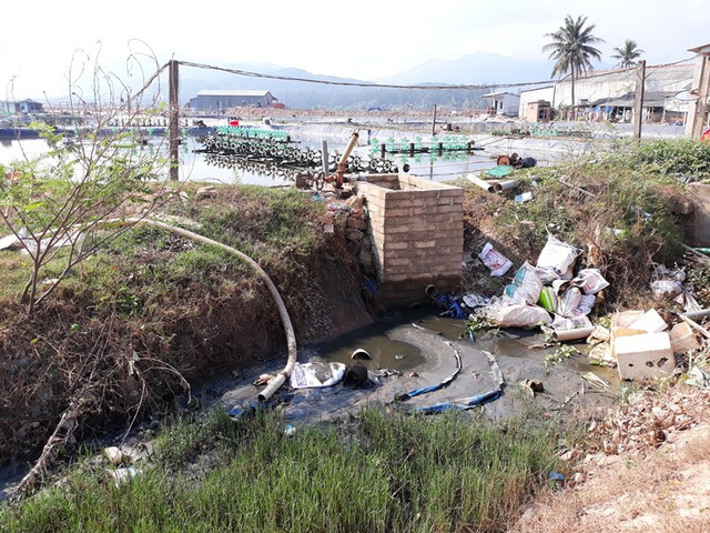 Việc nuôi tôm ồ ạt, không tuân thủ theo quy trình xả thải ở 2 xã Hoài Mỹ và Hoài Hải (huyện Hoài Nhơn) đang gây ô nhiễm môi trường nghiêm trọng