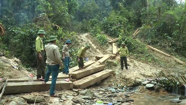 Một lượng lớn gỗ được lực lượng chức năng phát hiện trong rừng phòng hộ