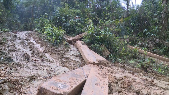 Vụ phá rừng nghiêm trọng xảy ra tại địa bàn xã Thanh Hóa, huyện Tuyên Hóa (Quảng Bình)