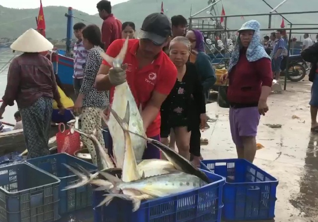 Mỗi con cá bè xước có trọng lượng từ 2 - 4 kg