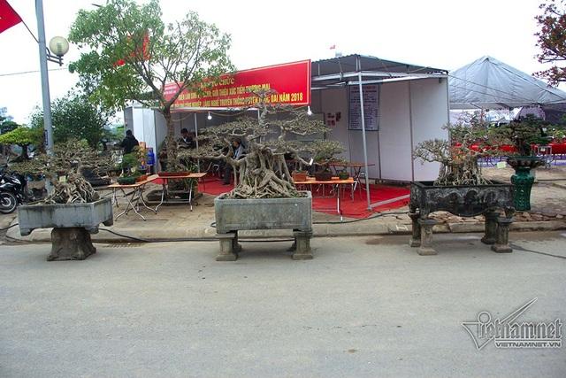 Bộ ba cây sanh nổi bật trong triển lãm sinh vật cảnh huyện Quốc Oai