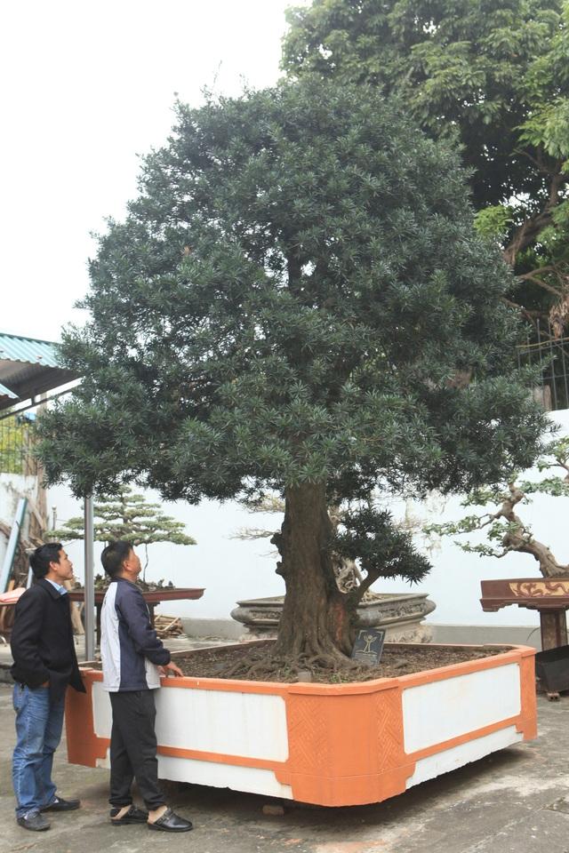 """Cây tùng cổ La Hán được đánh giá là đẹp nhất Việt Nam, có tuổi đời khoảng 600 năm. Theo các tích kể lại, cây tùng này trước đây là của vua Quang Trung tặng công chúa Ngọc Hân. Cây cao 4,5m, đường kính gốc khoảng 60cm, có dáng """"độc trụ kình thiên – cây gậy chống trời""""."""