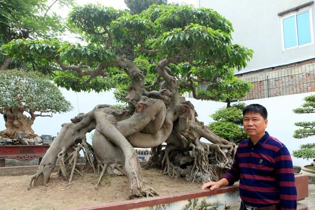"""""""Siêu"""" cây xanh """"Ngọa hổ tàng long"""" được biết đến là cây """"quý"""", có giá trị đắt đỏ bậc nhất hiện này. Cây có dáng đẩu hồ, mình rồng toát lên sự uy quyền, mạnh mẽ. Anh Toàn cho biết, cách đây vài năm, chủ tịch Hội sinh vật cảnh Đài Loan đã từng trả giá 1,4 triệu đô để sở hữu """"siêu cây"""" quý hiếm này nhưng anh không đồng ý bán."""
