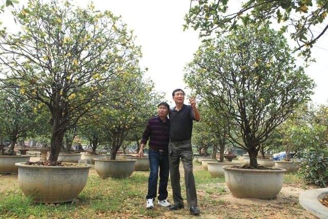 Ngoài vườn cây di sản trong khuôn viên nhà, anh Toàn còn có hai khu vườn bên ngoài rộng hàng trăm mét vuông. Trong ảnh là hàng chục cây mai tứ quý, nhiều năm tuổi được anh Toàn sưu tập trong nhiều năm.