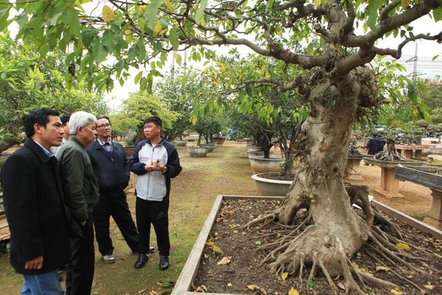 Rất nhiều cây bản địa có hình thù kì quái được giới chơi cây săn lùng tại vườn cây nhà anh Toàn. Được biết, mỗi ngày vườn cây của anh Toàn thu hút hàng đoàn khách yêu cây từ khắp mọi miền đất nước đến tham quan, thưởng lãm.