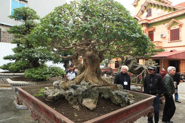 """Với hàng trăm cây cảnh quý hiếm, năm 2014 vườn cây """"độc nhất vô nhị này"""" từng được hội Sinh vật cảnh Châu Á bình chọn là Vườn cây xuất sắc nhất Đông Nam Á. Năm 2015 vườ cây tiếp tục được các tổ chức trong nước công nhận là vườn cây cảnh di sản đầu tiên tại Việt Nam."""