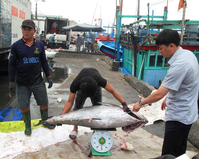 Nhiều tàu câu cá ngừ đại dương cập bờ đạt sản lượng lớn, có tàu đạt tới 4 tấn cá nên có nhiều thuyền viên được chia gần 20 triệu đồng.
