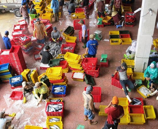 Cảng cá Quy Nhơn tất bật người bán, người mua thủy hải sản.