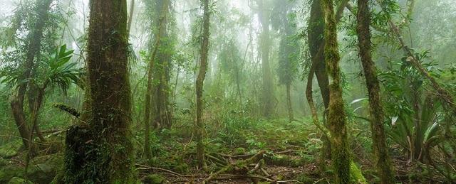 Rừng Amazon có lẽ không thể cứu vãn được nữa - 1