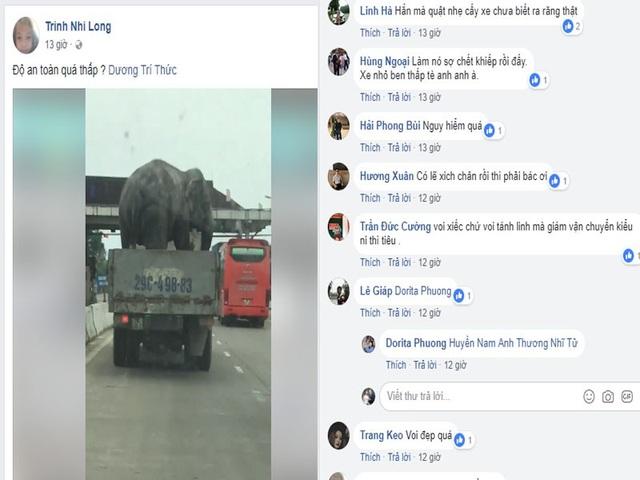Nhiều bình luận tỏ vẻ lo lắng về sự an toàn khi con voi được vận chuyển như thế này.
