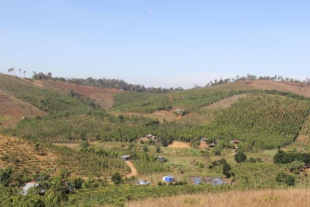 """Những mái nhà """"bất hợp pháp"""" mọc lên trên đất lâm nghiệp tại xã Quảng Thành"""