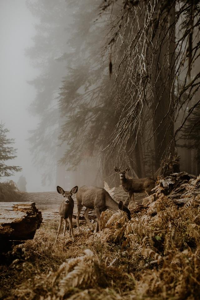 Giải mở - hạng mục ảnh Động vật hoang dã - tác giả Justyna Zdunczyk (Ba Lan)