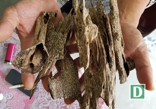Người chủ lò trầm ở Vạn Thắng (Vạn Ninh, Khánh Hòa) cho biết, loại trầm cầm trên tay của ông là trầm tự nhiên, mỗi kg lên tới 100 triệu đồng