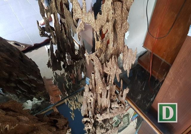 Nhiều cây trầm còn được người chơi trầm cho vào tủ kính, trưng bày rất trang trọng trong nhà mình